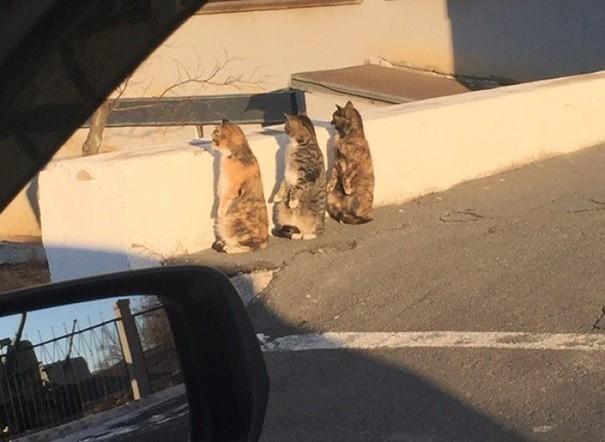 Phản ứng siêu đáng yêu của 3 chú mèo khi bị bắt quả tang - ảnh 1