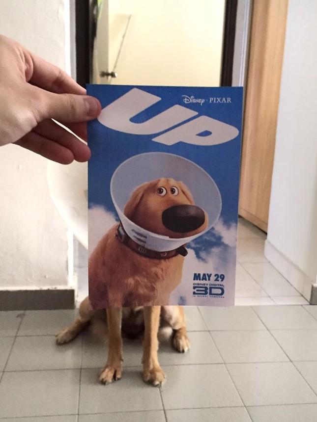 Những màn kết hợp 'bá đạo' giữa chó và… poster phim - ảnh 1