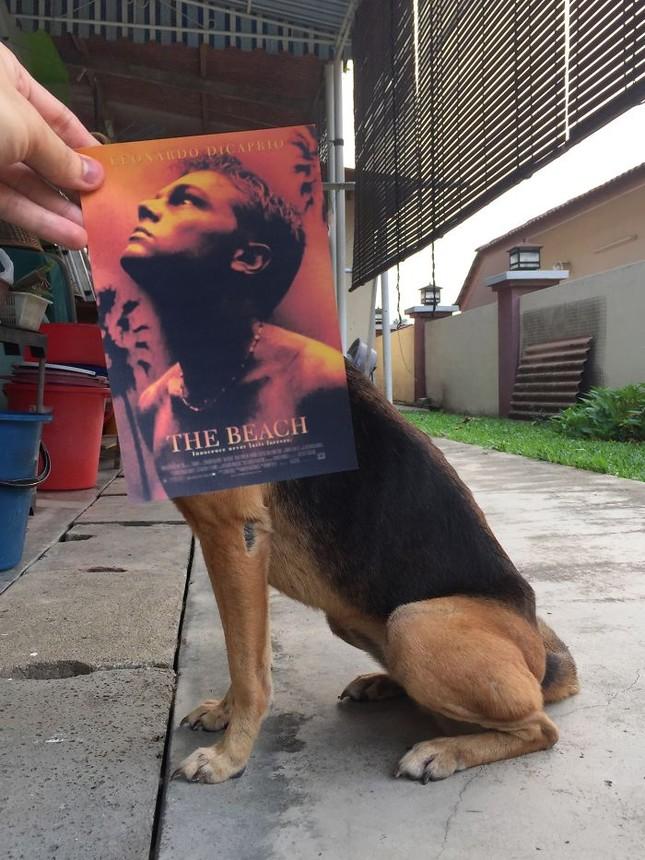 Những màn kết hợp 'bá đạo' giữa chó và… poster phim - ảnh 11