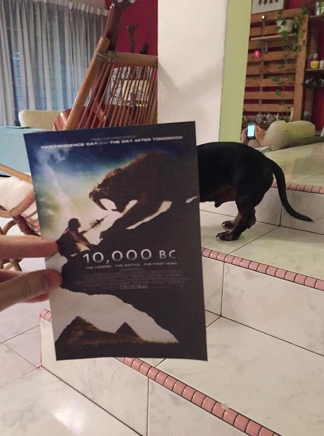 Những màn kết hợp 'bá đạo' giữa chó và… poster phim - ảnh 13