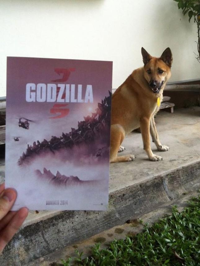 Những màn kết hợp 'bá đạo' giữa chó và… poster phim - ảnh 2