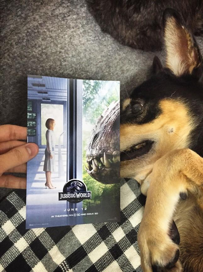 Những màn kết hợp 'bá đạo' giữa chó và… poster phim - ảnh 3