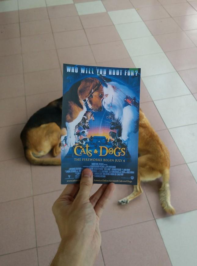 Những màn kết hợp 'bá đạo' giữa chó và… poster phim - ảnh 10