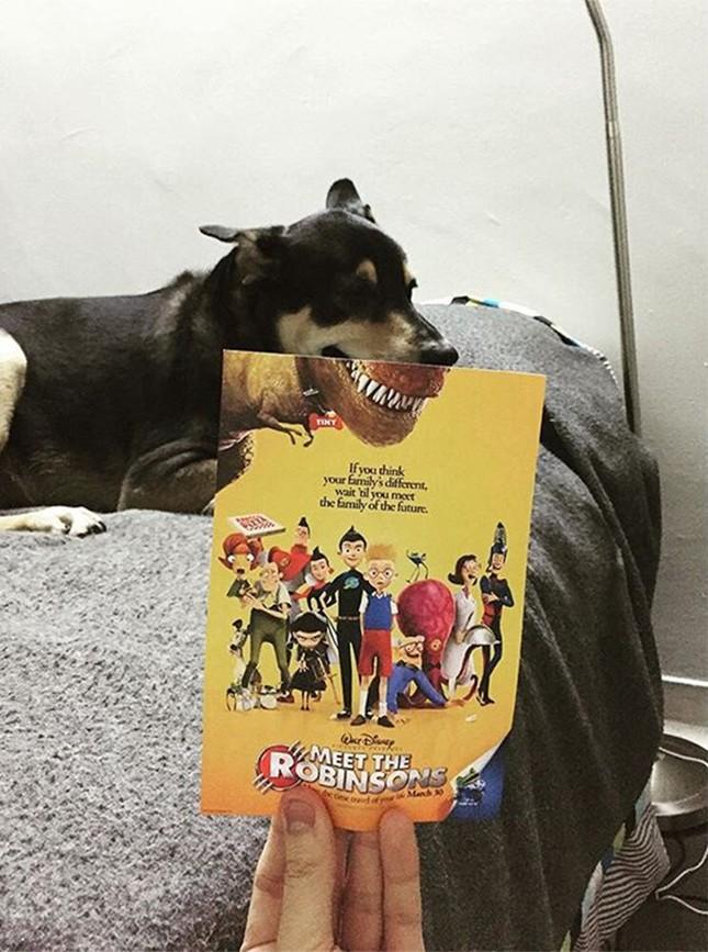 Những màn kết hợp 'bá đạo' giữa chó và… poster phim - ảnh 12