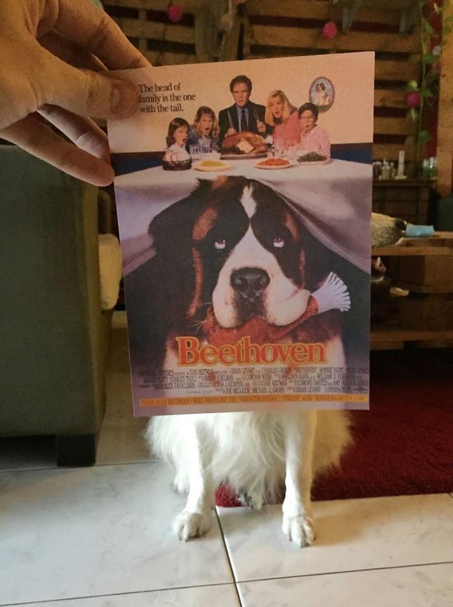 Những màn kết hợp 'bá đạo' giữa chó và… poster phim - ảnh 5