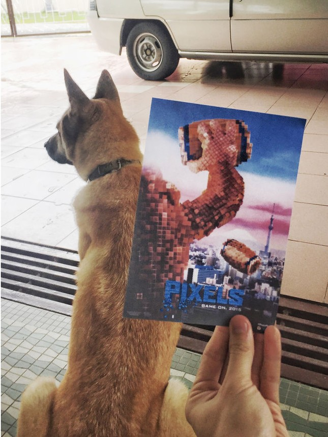 Những màn kết hợp 'bá đạo' giữa chó và… poster phim - ảnh 7