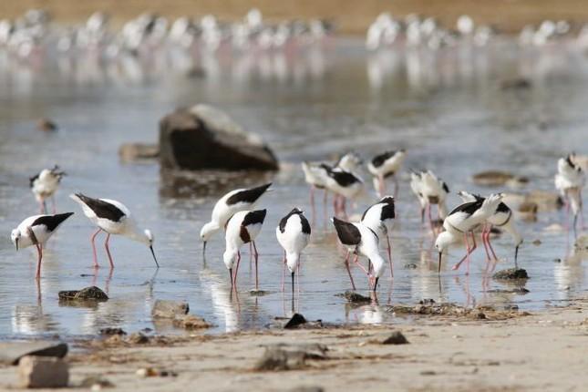 Kỳ lạ hồ sa mạc bỗng dưng đầy nước ở Australia - ảnh 3