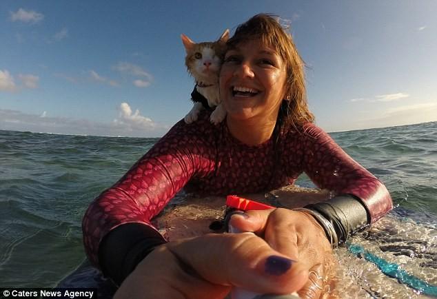 Gặp Kuli – chú mèo một mắt lướt sóng cực thuần thục tại Hawaii - ảnh 6