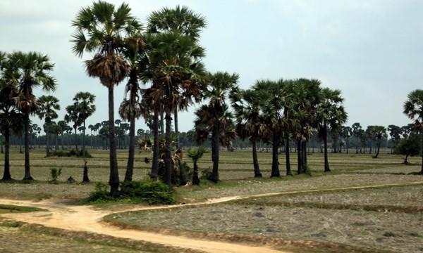 Một bộ đội VN chiến đấu tại Campuchia trở về sau 35 năm lưu lạc - ảnh 1