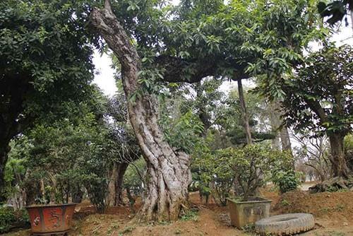 Đường dây buôn bán siêu cây trăm tỷ ở Hà Nội - ảnh 3