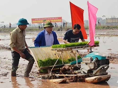 Bí thư, Chủ tịch Hà Nội cấy lúa, lội ruộng cùng nông dân - ảnh 1