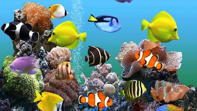 Những sự thật bất ngờ về loài cá cảnh - ảnh 3
