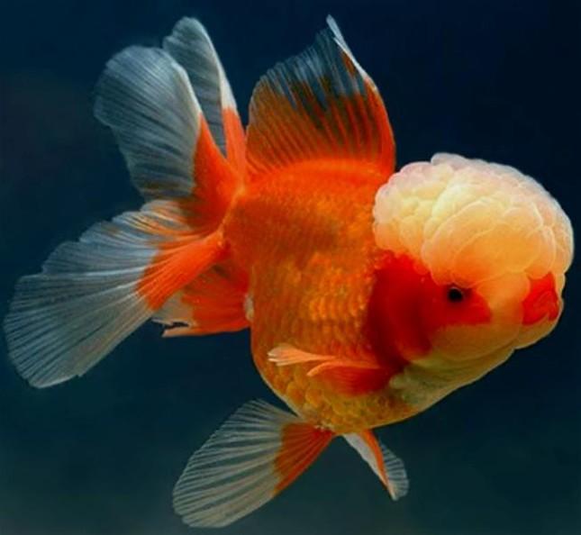 Những sự thật bất ngờ về loài cá cảnh - ảnh 1