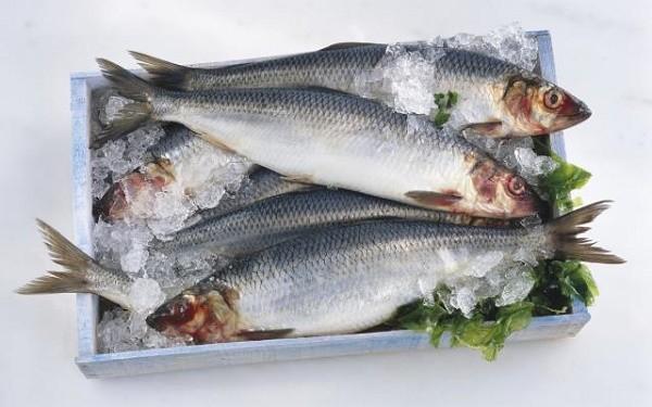 3 loại cá rẻ tiền nhưng quý hơn vàng rất tốt cho sức khỏe - ảnh 1