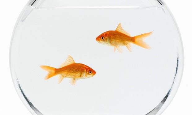 Người mẹ nhẫn tâm bắt con gái nuốt hơn 30 con cá vàng chết - ảnh 1