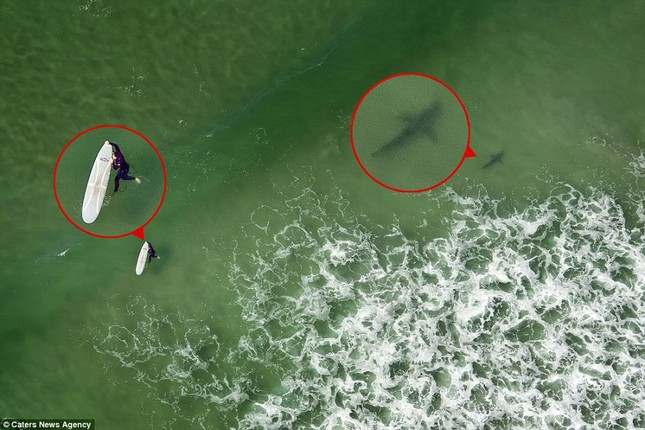 Đứng tim giây phút 5 con cá mập dàn trận 'vây hãm' một cô gái - ảnh 2