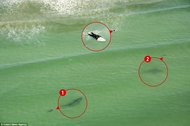 Đứng tim giây phút 5 con cá mập dàn trận 'vây hãm' một cô gái - ảnh 3