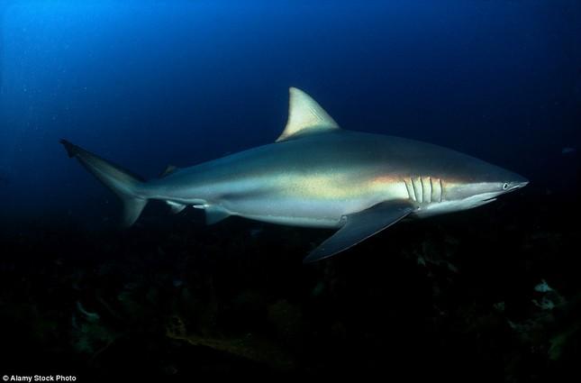 Đứng tim giây phút 5 con cá mập dàn trận 'vây hãm' một cô gái - ảnh 5