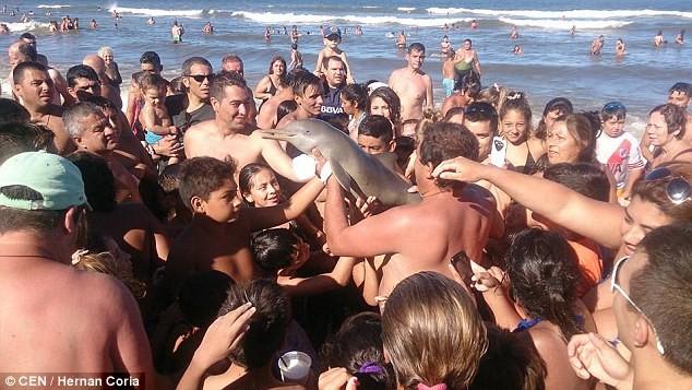 Cá heo chết thảm trên bãi cát sau khi 'được' vuốt ve, chụp ảnh - ảnh 1