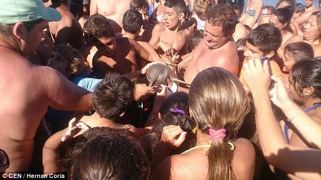 Cá heo chết thảm trên bãi cát sau khi 'được' vuốt ve, chụp ảnh - ảnh 3