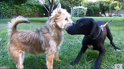 Nghị lực của con chó đáng thương bị hàng ngàn con ve hút máu - ảnh 5