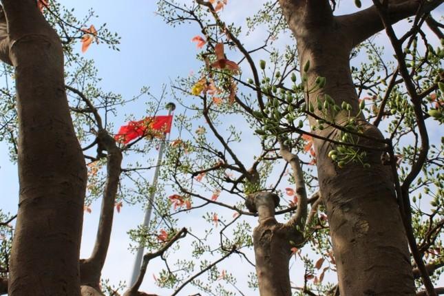 Cận cảnh cây mai cổ thụ 100 tuổi giá 2 tỷ ở Đà Nẵng - ảnh 3