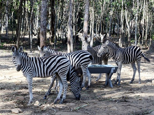 Thông tin tiếp về Vinpearl Safari - ảnh 1