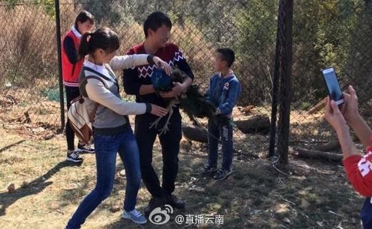 Bị du khách Trung Quốc bắt chụp hình, 2 con công sốc tới chết - ảnh 1