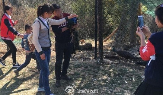 Bị du khách Trung Quốc bắt chụp hình, 2 con công sốc tới chết - ảnh 2