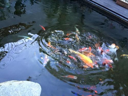 Cận cảnh bể cá cảnh bạc tỷ trong biệt thự của Cao Thái Sơn - ảnh 5