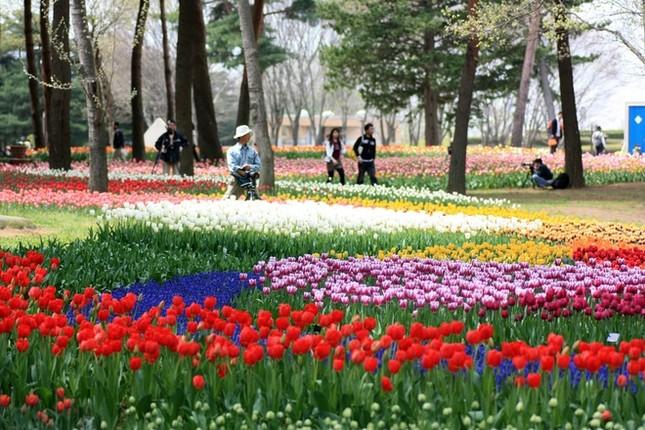 Vẻ đẹp thiên đường hoa ở công viên Hitachi Seaside Nhật Bản - ảnh 7