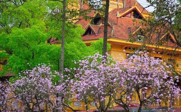 9 điểm đến đẹp mê hồn không thể bỏ qua trong tháng 3 ở Việt Nam - ảnh 1
