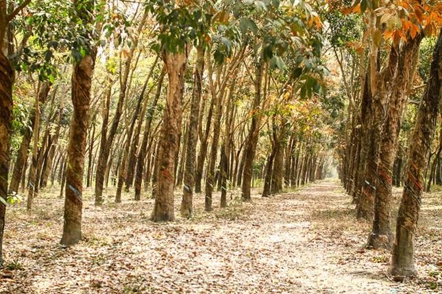 9 điểm đến đẹp mê hồn không thể bỏ qua trong tháng 3 ở Việt Nam - ảnh 8