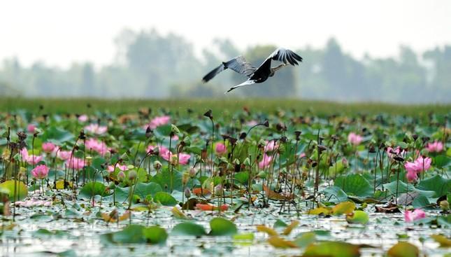 9 điểm đến đẹp mê hồn không thể bỏ qua trong tháng 3 ở Việt Nam - ảnh 9