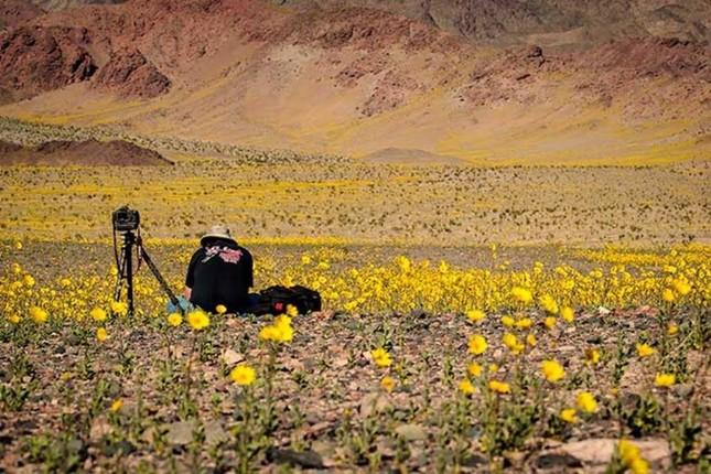 Ngỡ ngàng trước 'biển hoa vàng' rực rỡ nơi 'Thung lũng chết' - ảnh 2