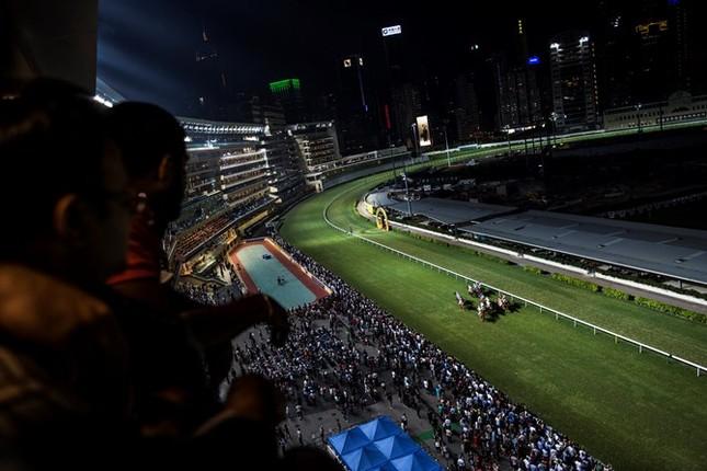 Khám phá ngành kinh doanh đua ngựa tỷ đô ở Hong Kong - ảnh 1