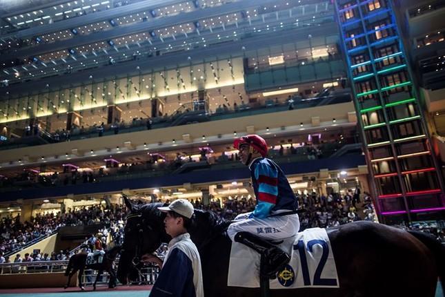 Khám phá ngành kinh doanh đua ngựa tỷ đô ở Hong Kong - ảnh 2