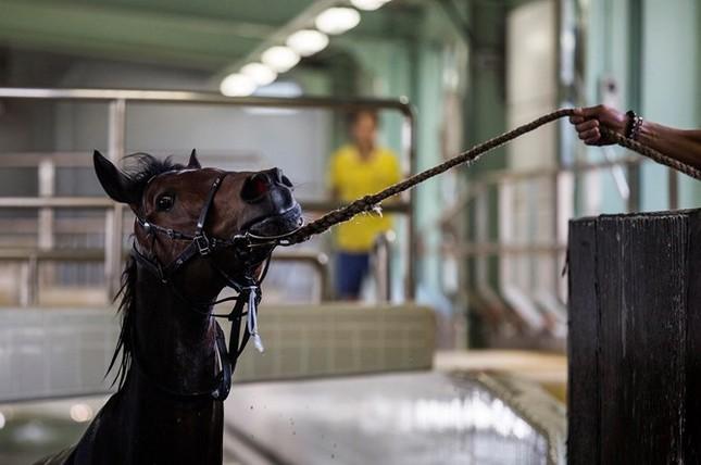 Khám phá ngành kinh doanh đua ngựa tỷ đô ở Hong Kong - ảnh 6