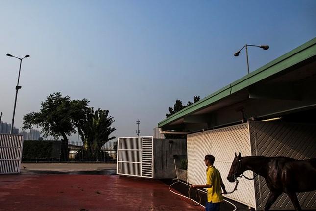 Khám phá ngành kinh doanh đua ngựa tỷ đô ở Hong Kong - ảnh 9