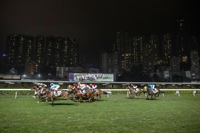 Khám phá ngành kinh doanh đua ngựa tỷ đô ở Hong Kong - ảnh 10