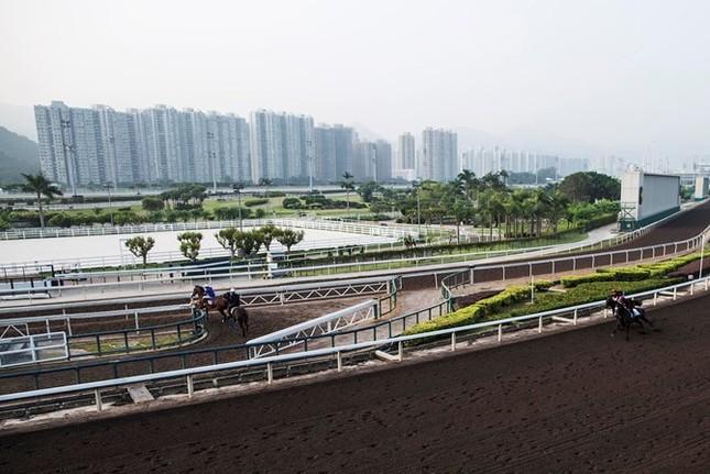 Khám phá ngành kinh doanh đua ngựa tỷ đô ở Hong Kong - ảnh 5