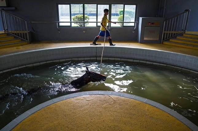 Khám phá ngành kinh doanh đua ngựa tỷ đô ở Hong Kong - ảnh 7