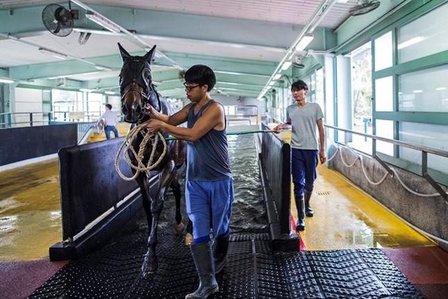 Khám phá ngành kinh doanh đua ngựa tỷ đô ở Hong Kong - ảnh 8