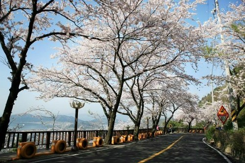 Mãn nhãn với những con đường hoa anh đào tuyệt đẹp trên thế giới - ảnh 5