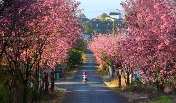 Mãn nhãn với những con đường hoa anh đào tuyệt đẹp trên thế giới - ảnh 7