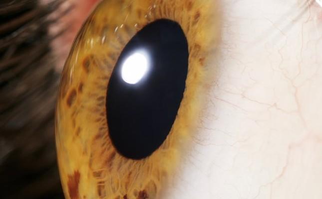 DNA của tảo có thể giúp người khiếm thị thấy được ánh sáng - ảnh 1