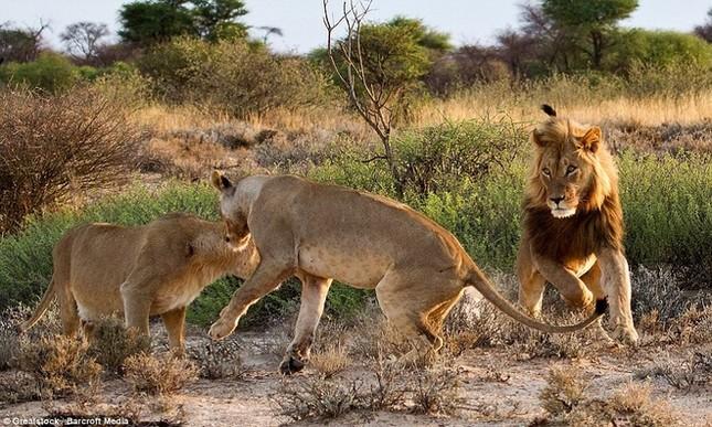 Sư tử cái ghen tuông, trút cơn thịnh nộ lên bạn tình - ảnh 1