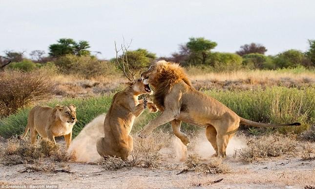 Sư tử cái ghen tuông, trút cơn thịnh nộ lên bạn tình - ảnh 3