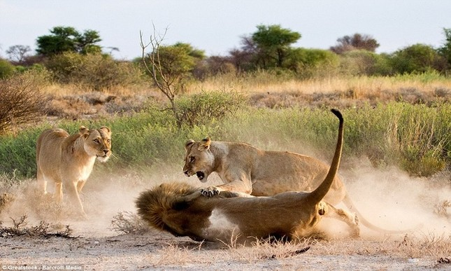 Sư tử cái ghen tuông, trút cơn thịnh nộ lên bạn tình - ảnh 4