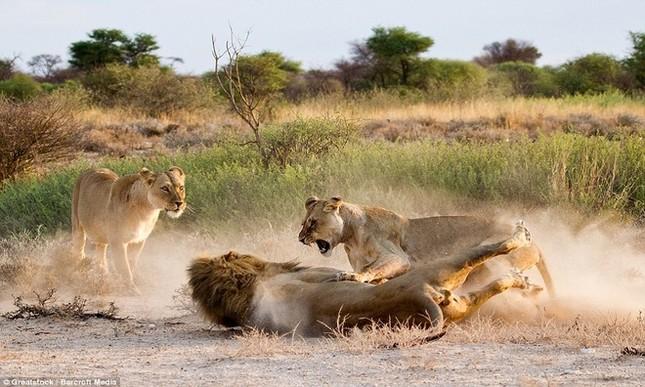 Sư tử cái ghen tuông, trút cơn thịnh nộ lên bạn tình - ảnh 5